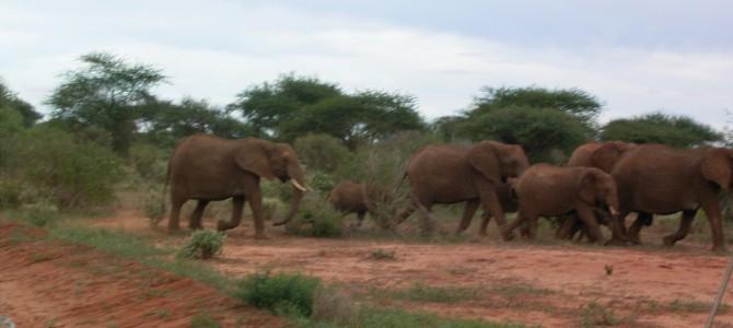 Kenia – Visum für Einreise ab 1. Juli 2015